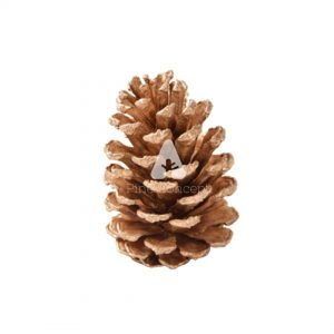 2.5 Inch Gold Pinecone
